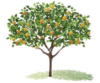 ie_urban_fruit